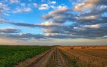 Tiempo de desbrozo y de recolección de semillas