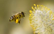 Biomímesis: ¿Emular o explotar a la naturaleza?